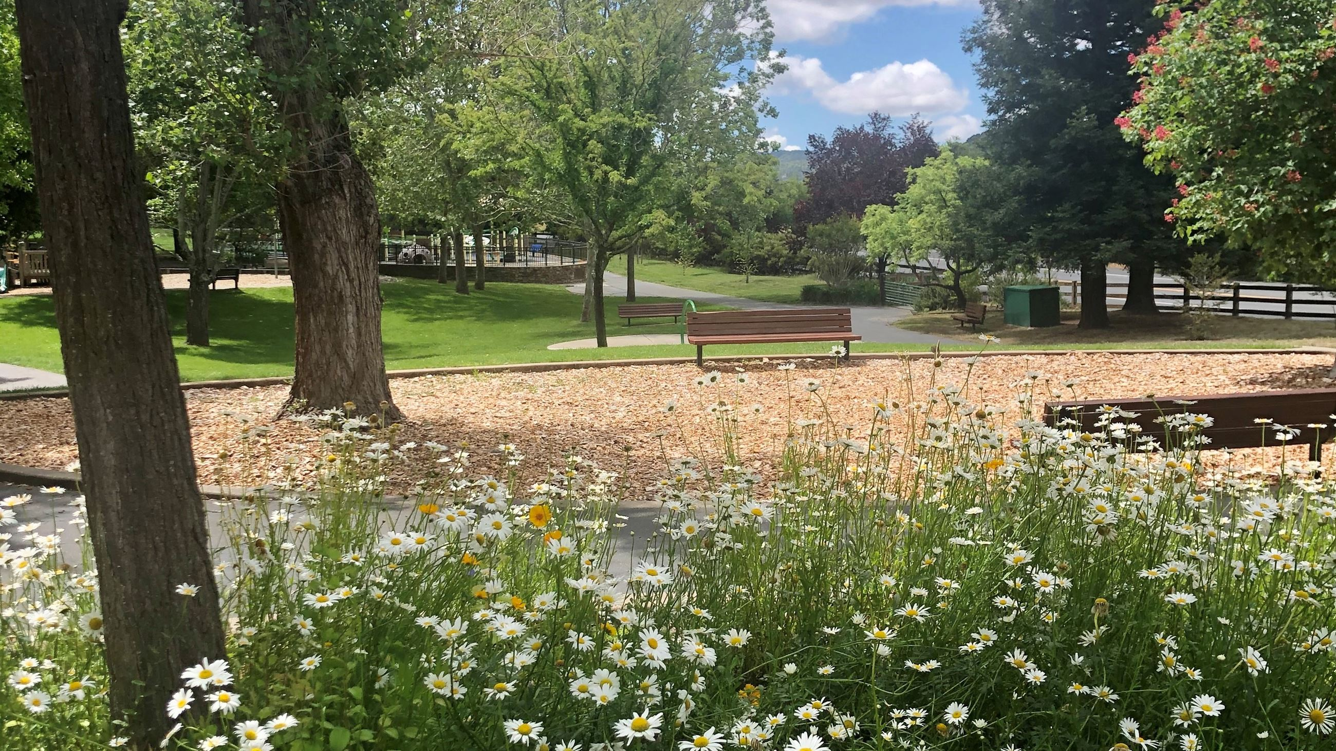 Commons Park 2020 Wildflower Landscape